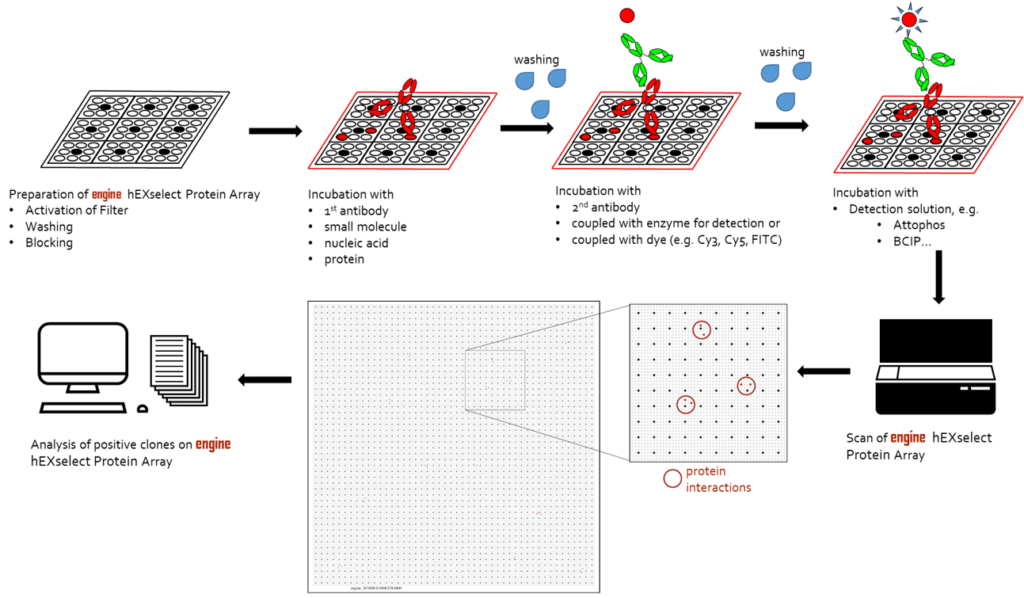 engine protein arrays incubation scheme