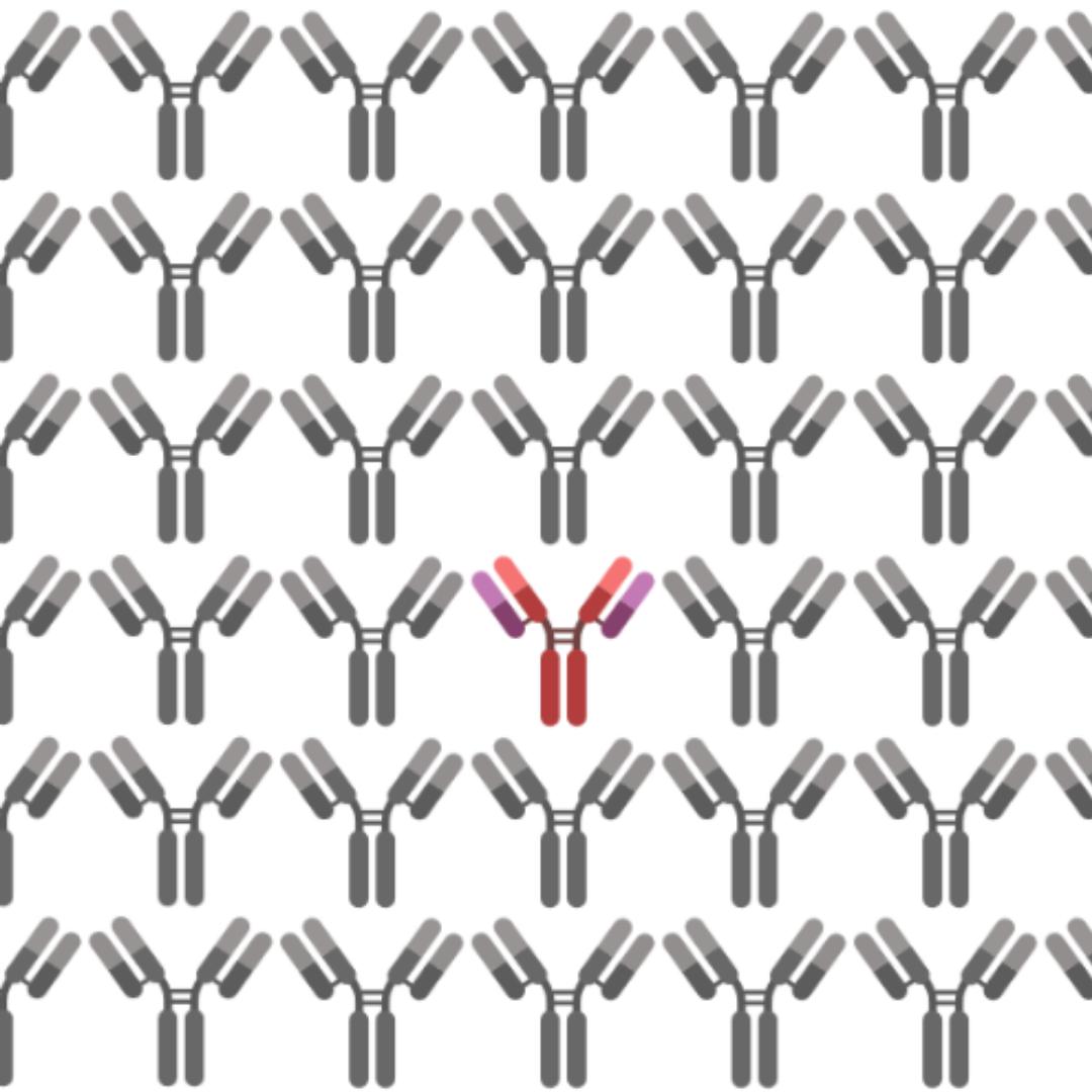 Antibody Specificity Vs. Cross-Reactivity